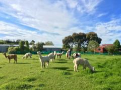 2018年新西兰留学费用预览