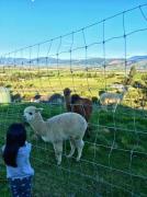 新西兰留学准备什么 赴新西兰留学的行前准备工作