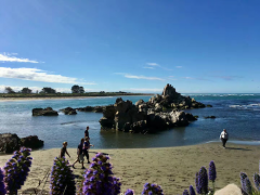 新西兰留学申请 2018年新西兰本科留学申请全攻略