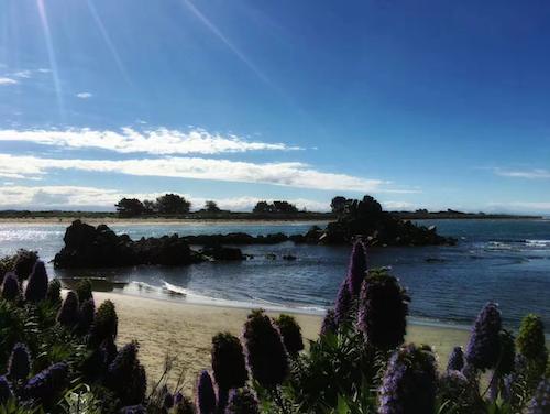 新西兰留学一年费用,英国留学一年要多少钱,新西兰八大