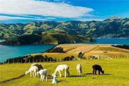 新西兰留学专业排名,新西兰留学专业选择,新西兰留学